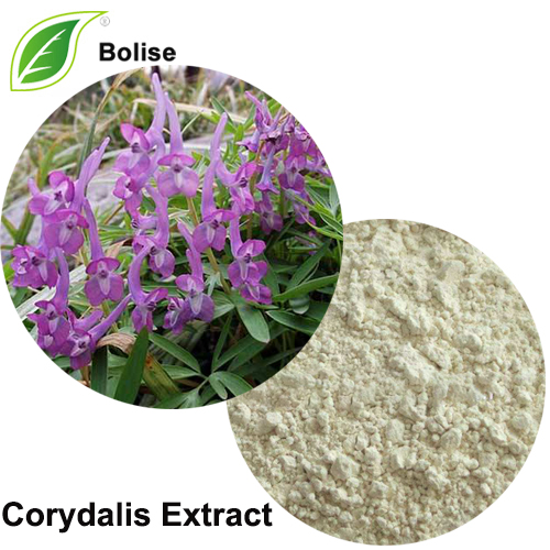 Corydalis Extract(yanhusuo W. T. Wang Extract)