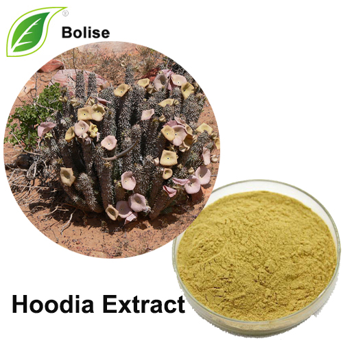 Hoodia Extract Powder Suppliers Hoodia Gordonii Extract