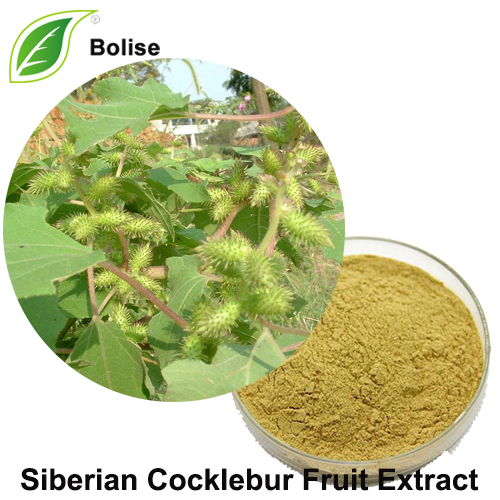 Siberian Cocklebur Fruit Extract