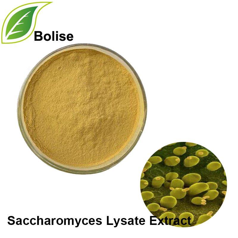 Saccharomyces Lysate Extract
