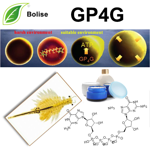 GP4G (Diguanosine Tetraphosphate)