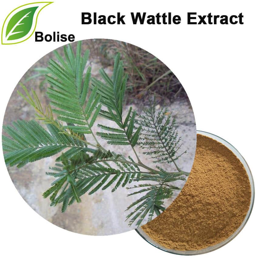 Nwa ekstrè Wattle (Acacia Mearnsii èkstre)