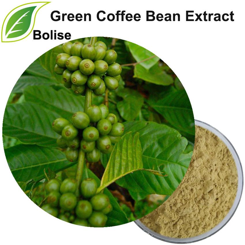 მწვანე ყავის ფქვილი ამონაწერი