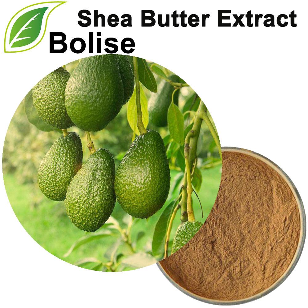 Butyrospermum Parkii քաղվածք (Shea Butter Extract)