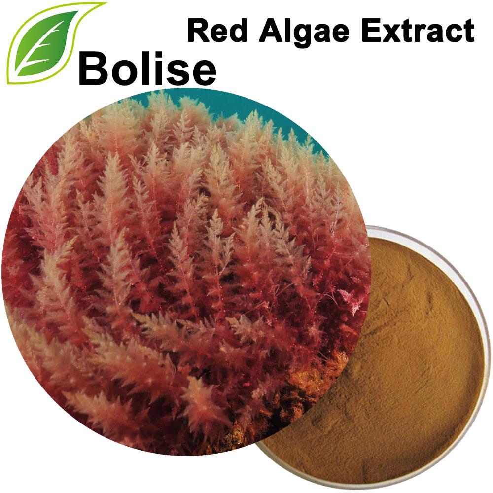 Extracto de algas vermellas