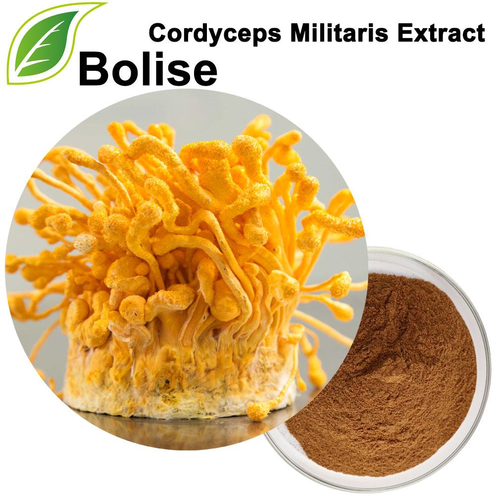 Cordyceps Militaris Extract