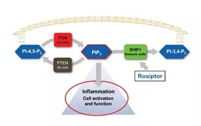 Rosiptor mechanism of action