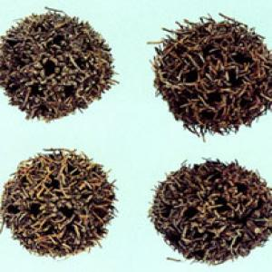 Beautiful Sweetgum Fruit Extract