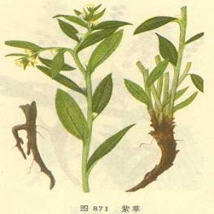 Gromwell Root extract(Arnebia Root Extract)