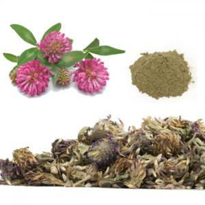Red Clover Blossom Extract Powder
