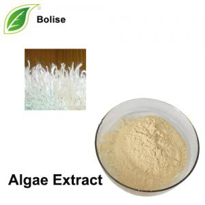 Algae Extract(Marine algae extract)