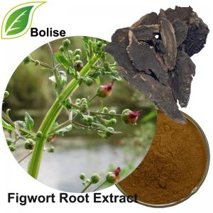 Figwort Root Extract(Radix Scrophulariae Extract)