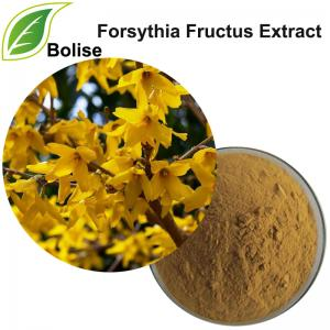 Forsythia Fructus Extract(Weeping Forsythia extract)