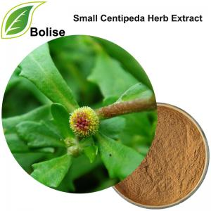 Small Centipeda Herb Extract(Herba Centipedae Extract)
