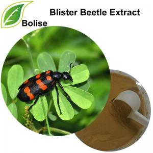 Blister Beetle Extract(Mylabris Extract)