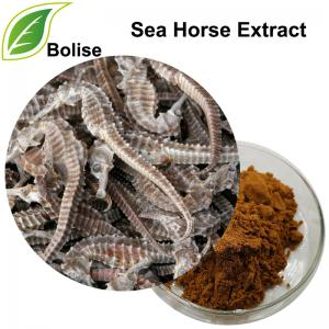 Sea Horse Extract(Hippocampi Extract)