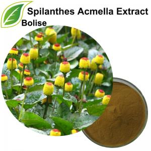 Spilanthes Acmella Extract