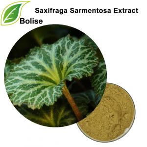 Strawberry Tigeria Extract(Saxifraga Sarmentosa Extract)