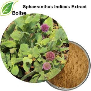 Extrait d'Hedysarum Villosum (Extrait de Sphaeranthus Indicus)