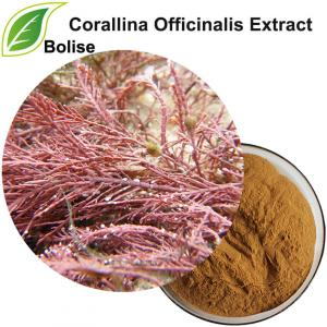 Corallina Officinalis Extract