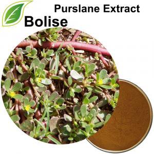 Chiết xuất Purslane (Chiết xuất Portulaca Oleracea)