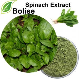 Spinacia Oleracea Extract (Spinach Extract)