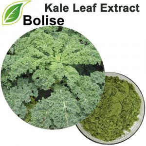 Kale Leaf Extract