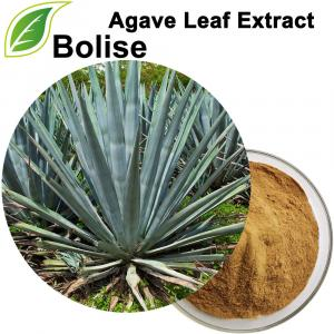 Екстракт од лист од агав