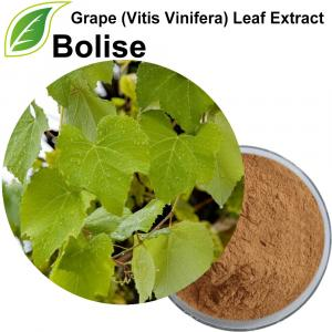 Extracto de hoja de uva (Vitis vinifera)