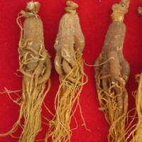 Asian Red Ginseng extract