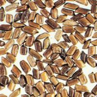 Cassia Seed extract(Semen Cassiae Extract)