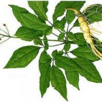 Low pesticide residues ginseng extract