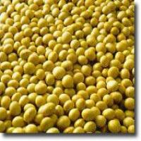 Soy isoflavone(Soybean Extract)