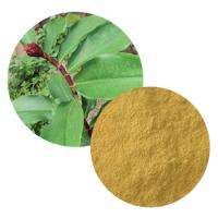 Costus Igneus Extract(Insulin Plant Extract)