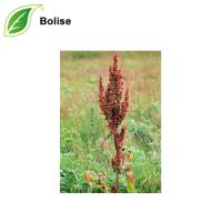 Rumex Occidentalis Extract(Western Dock Extract)