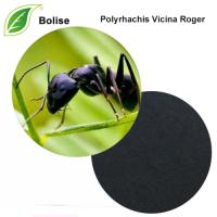 Chinese Black Mountain Ant Extract(Polyrhachis Vicina Roger)