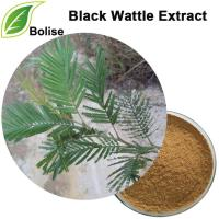 Chiết xuất Black Wattle (Chiết xuất Acacia Mearnsii)
