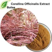 Extract Corallina Officinalis