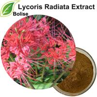 Ekstrak Lycoris Radiata