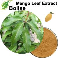 Mango Leaf Extract(Mango Leaves Extract)