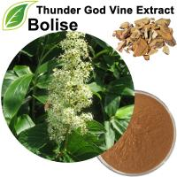 Thunder God Vine Extract
